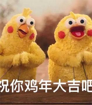 """两只外形酷似""""鸡""""的鹦鹉兄弟在日本很火!周边产品人气爆棚"""