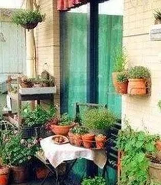 阳台上的绿色小花园 天然无污染