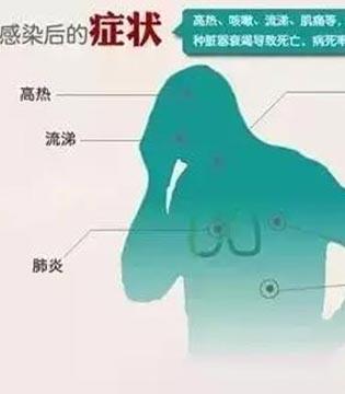 预防H7N9禽流感 避免接触活禽是关键
