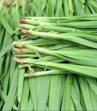 韭菜春食则香夏食则臭 所以春季必吃韭菜