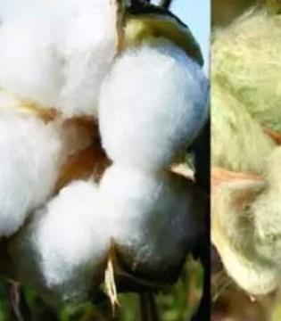 真材实料本色棉 服务于中国和全球千万家庭