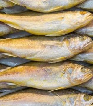 宝宝适合吃什么鱼 宝宝吃7种鱼好处多