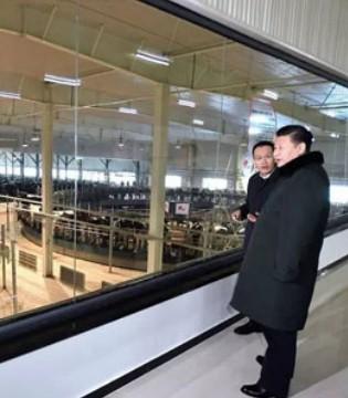 旗帜奶粉获世界最高奖项 中国创造登顶世界之巅