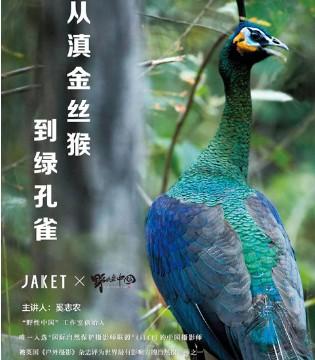 为了拯救仅存的500只绿孔雀现开始行动