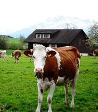 成人奶粉和婴幼儿奶粉一样重要 严选奶源和渠道安全