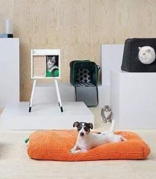 宜家出了新家居 给宠物做家居 是它最新的发现