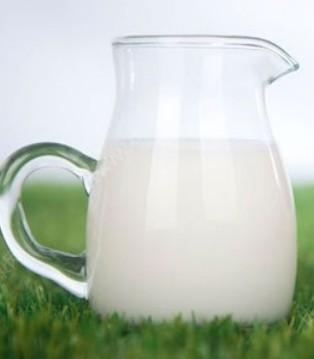 羊奶是人类的主要乳源之一 今日的羊奶粉成为新宠