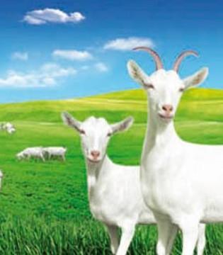 中国乳企纷纷做起了羊奶粉 市场规模已超50亿