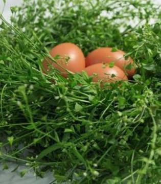 春分宝宝吃什么好 六种蔬菜适合孩子吃