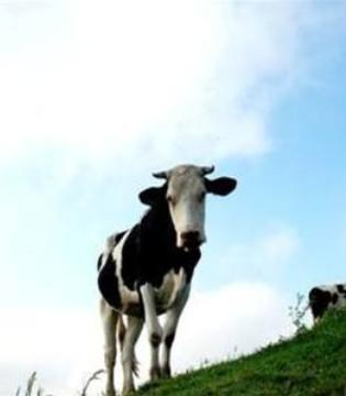 澳洲乳业制品生产巨头德运进军中国市场
