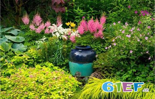 想要庭院花园美  这些耐阴植物容易养