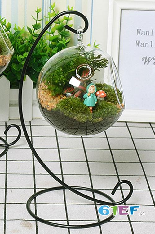 大家知道苔藓植物为什么要放在玻璃罩里养护吗