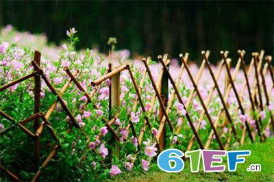 我想有一处篱笆小院 看尽繁花 静守流年
