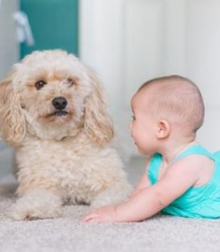 小儿哮喘高发季来到 怎么治疗见效快