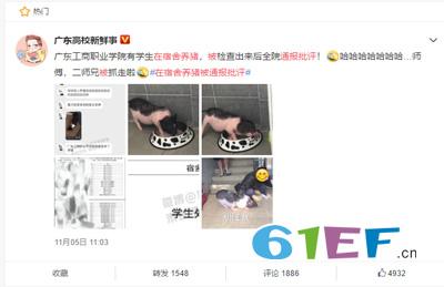 广东一学生在宿舍养猪被通报批评 师傅 二师兄被抓走了
