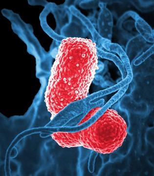 益生菌的作用有哪些?如何帮孩子挑选适合的益生菌?