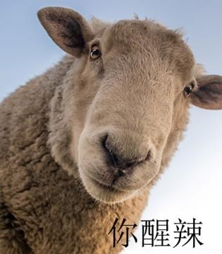 知名游泳运动员宁泽涛疑似公开恋情 粉丝含泪祝福