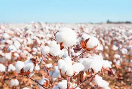 木直木帛・以爱为名 有机棉与植物染色的有机结合