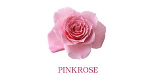PINKROSE粉玫瑰